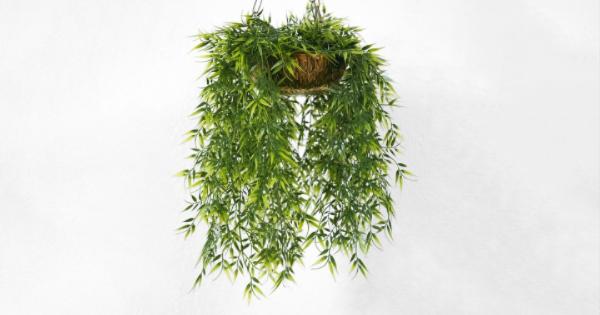 houseplants (1)